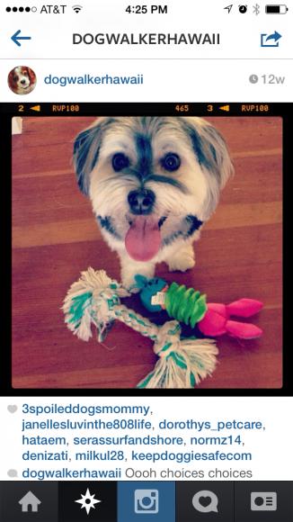 dog walker instagram
